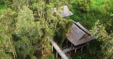 Quang cảnh tuyệt đẹp của rừng tràm Trà Sư, An Giang